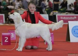 Angelonato Poseidon Cataleyagold, Puppy  3 place