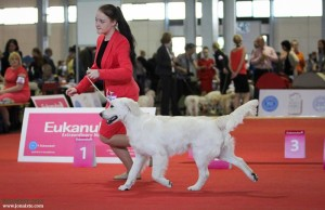 Angelonato Poseidon Cataleyagold  Puppy  3 place